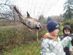 Madarászat 2015. decemberében (háló)